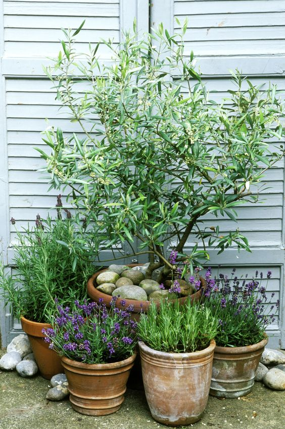 Tuin inspiratie de mediterrane tuin woonblog for Small garden ideas with pots